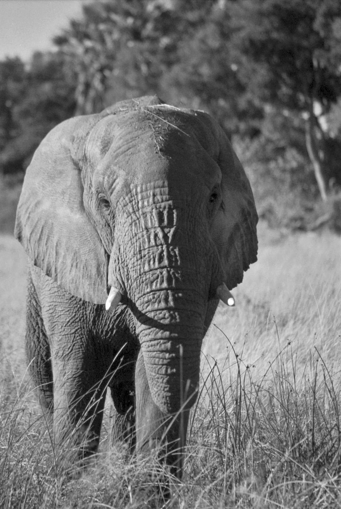 All About Elephants And A Few Other Things Too