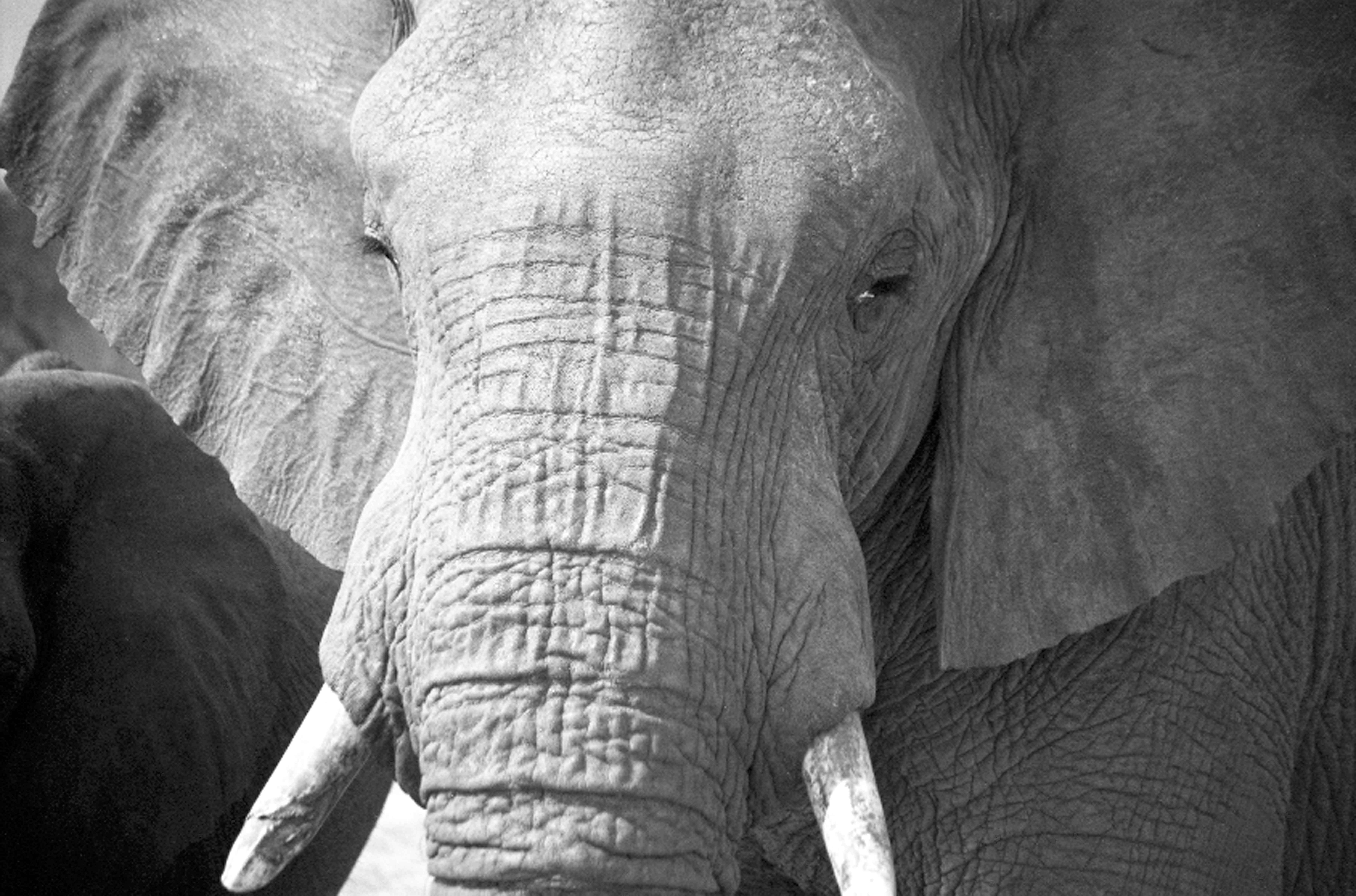 baby elephant about elephants the face