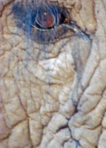 Jabu's eye