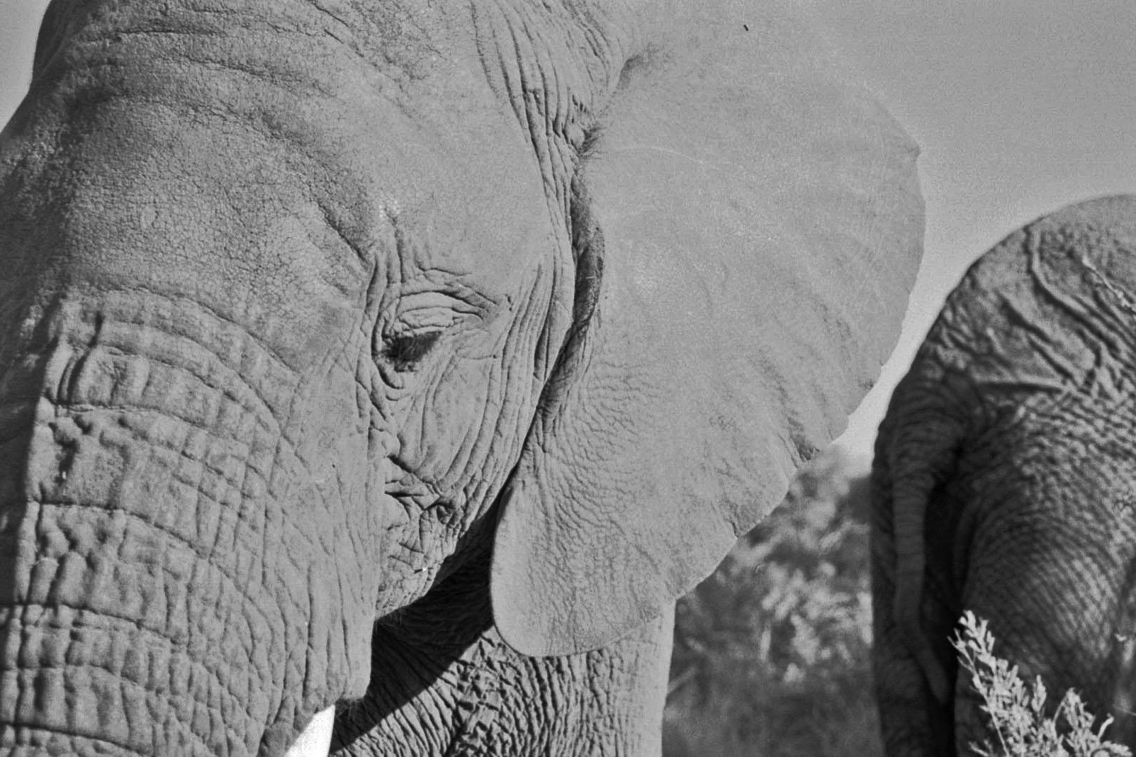 lives of elephants about elephants