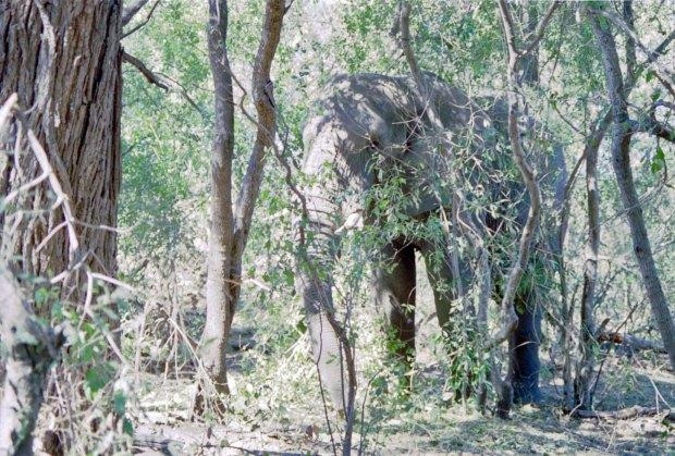 Jabu in the trees 2