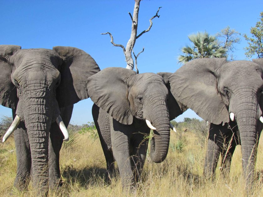 L to R: Jabu, Thembi & Morula, photograph by Cheryl Merrill